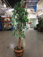 Silk Plant For Sale - Leicester
