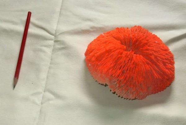 Orange Artificial Coral
