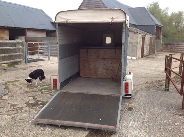Buy Sinclair Large Horse Trailer