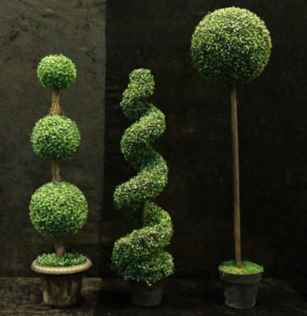 Topiary Trees for sale