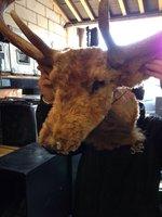 Bull, Buffalo and Deer Heads