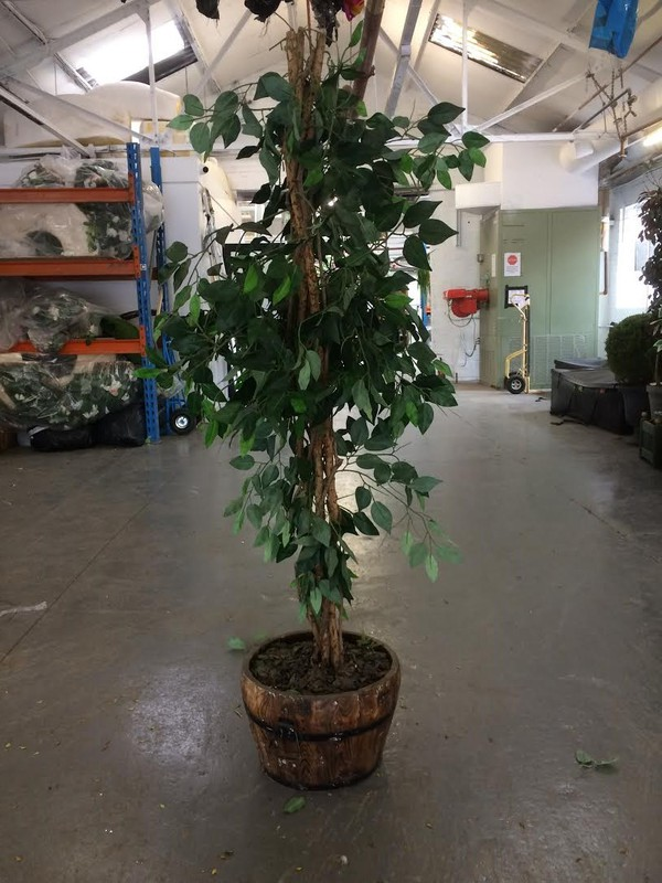 Silk Plant For Sale - Leicester 4