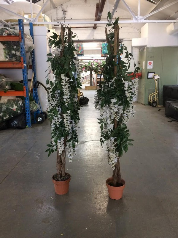 Silk Plant For Sale - Leicester 10