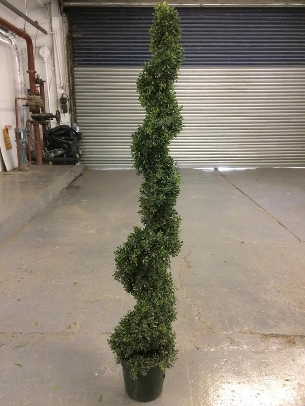 Silk Plant For Sale - Leicester 5