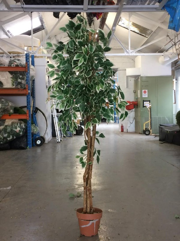 Silk Plant For Sale - Leicester 3