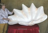 Giant Scallop Shells Made From Resin