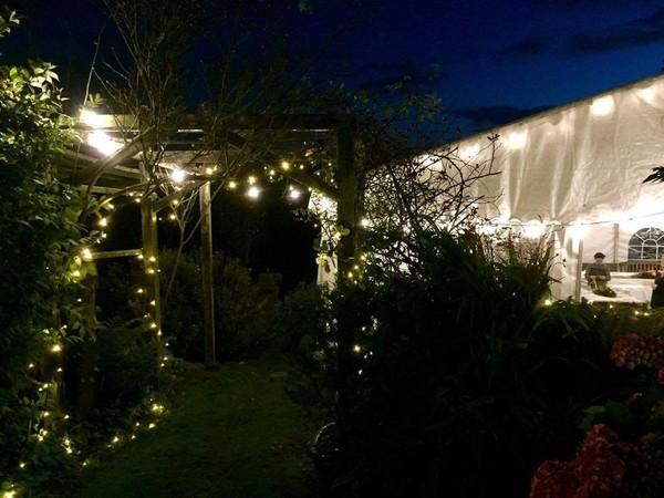 Festoon lights for sale