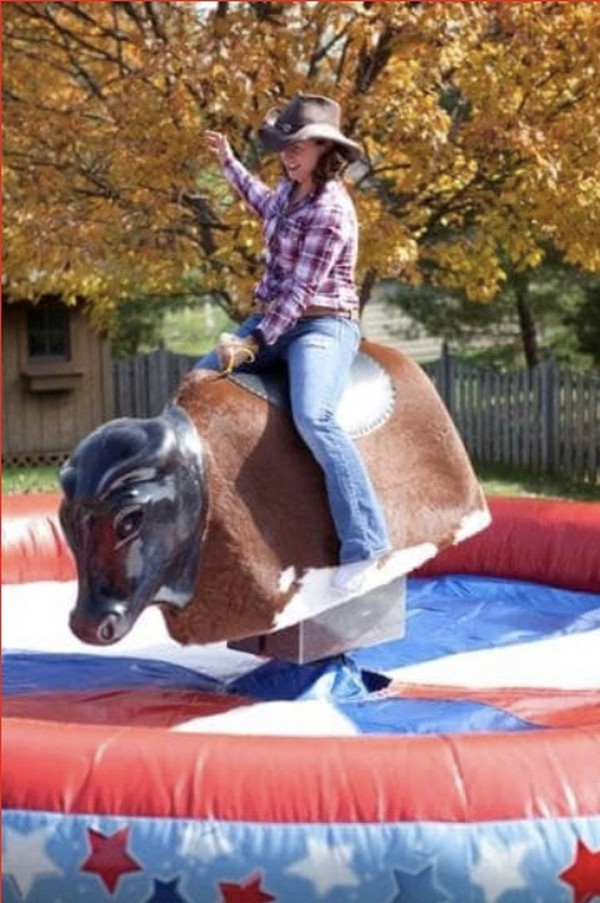 Riding bull for sale