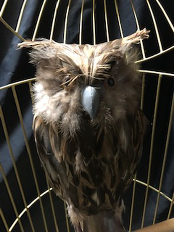 Owl cage for sale