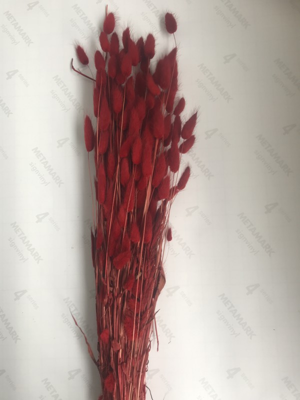 Dark red feathery