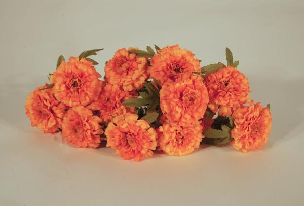 Marigold heads