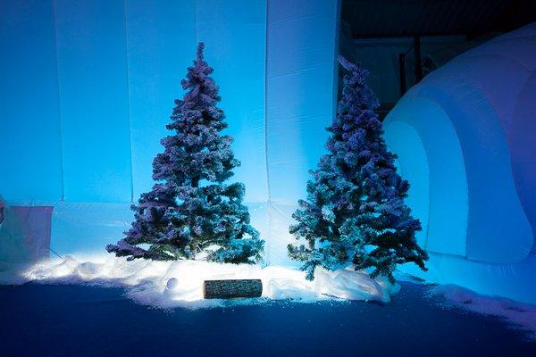 Christmas tree for sale