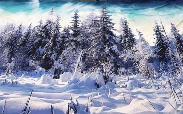 Winter Tree Snow Scene