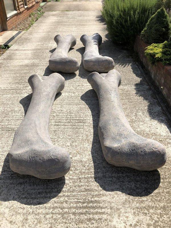 Large dinosaur bone prop