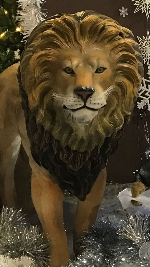 Real Life Size Lion Prop For Sale
