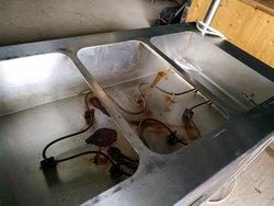 Carvery / Bain Marie / Hot Cupboard / Heated Gantry for sale